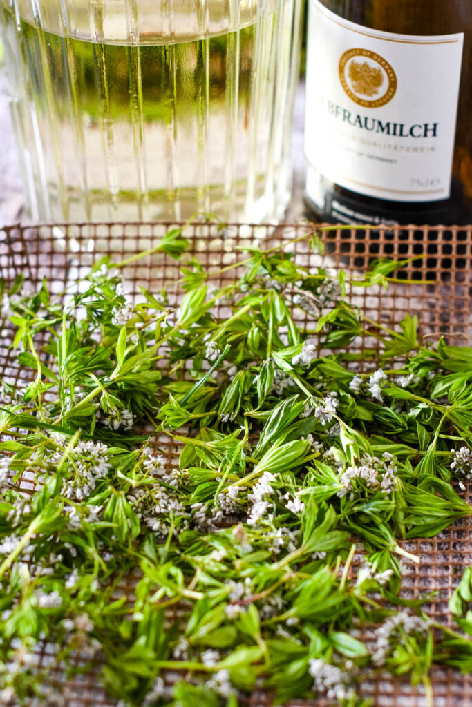 drying the sweet woodruff on oven tray