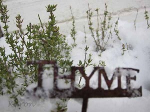 How To Make Thyme Tea For Colds And Caughs