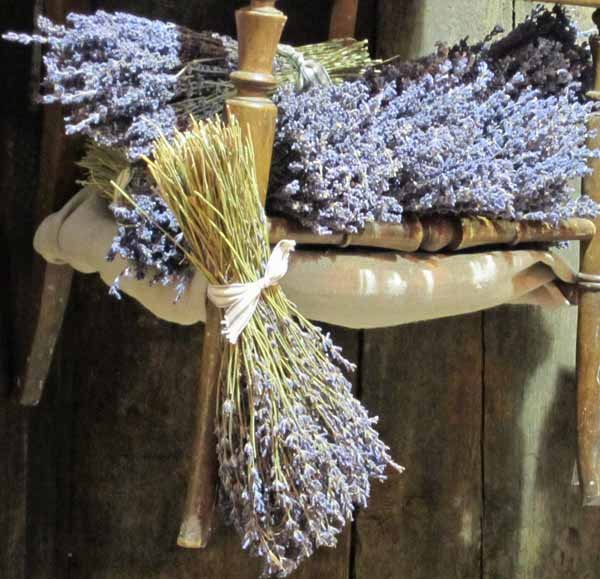 bunches of dried lavender tied to old chair