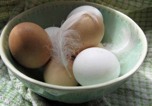 How To Test If Eggs Are Fresh