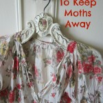 herbs to keep moths away