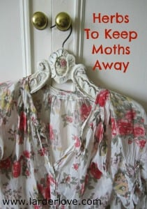 Keep Moths Away Naturally