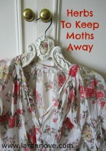 herbs to keep moths away