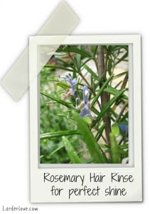 Rosemary For Hair Care
