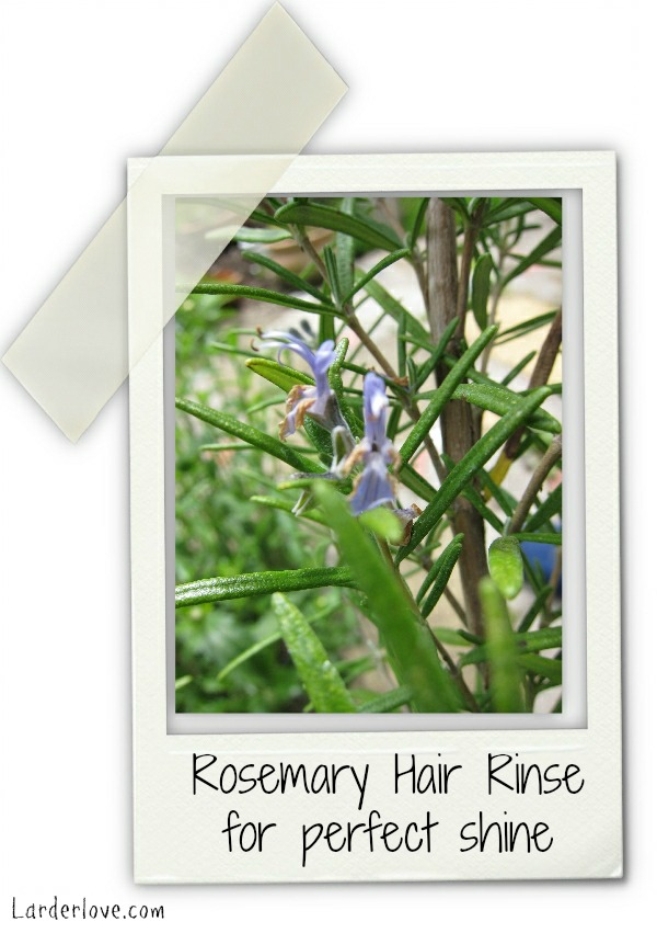 rosemary hair rinse by larderlove