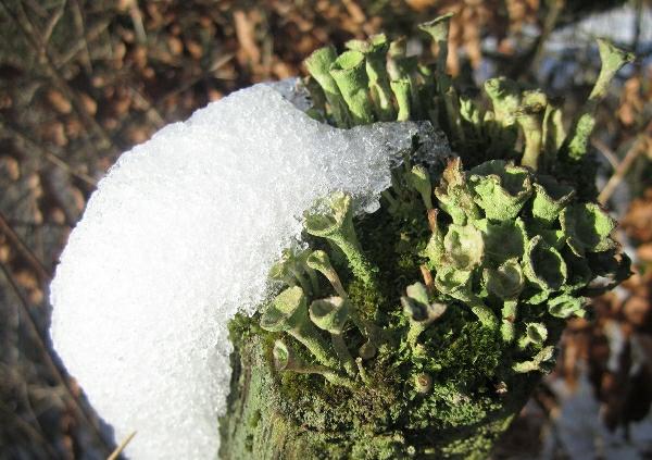 SnowColour3