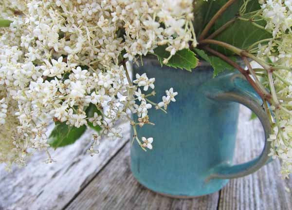 elderflower fizz