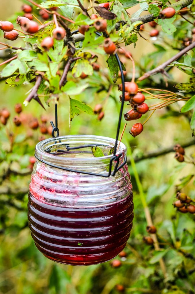 hedgerow jelly in jar on hedge