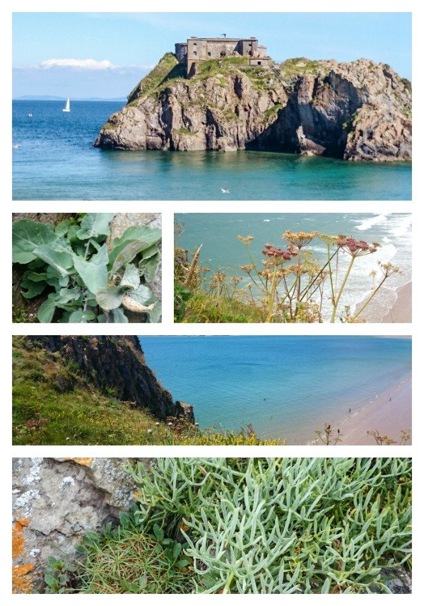 samphire collage