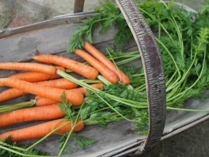pickled carrots larder love