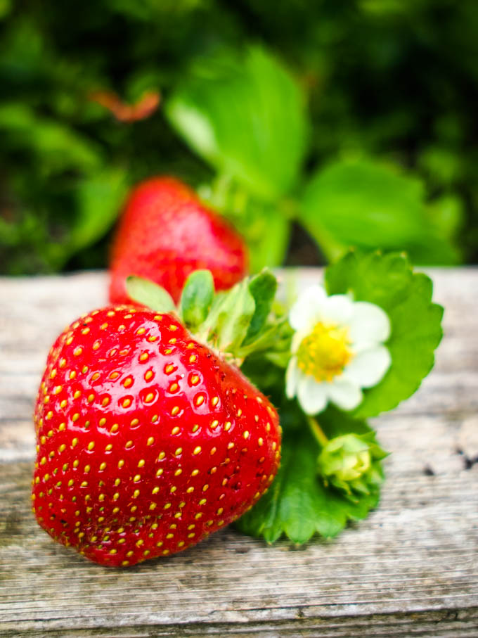 strawberries with leaves and flower