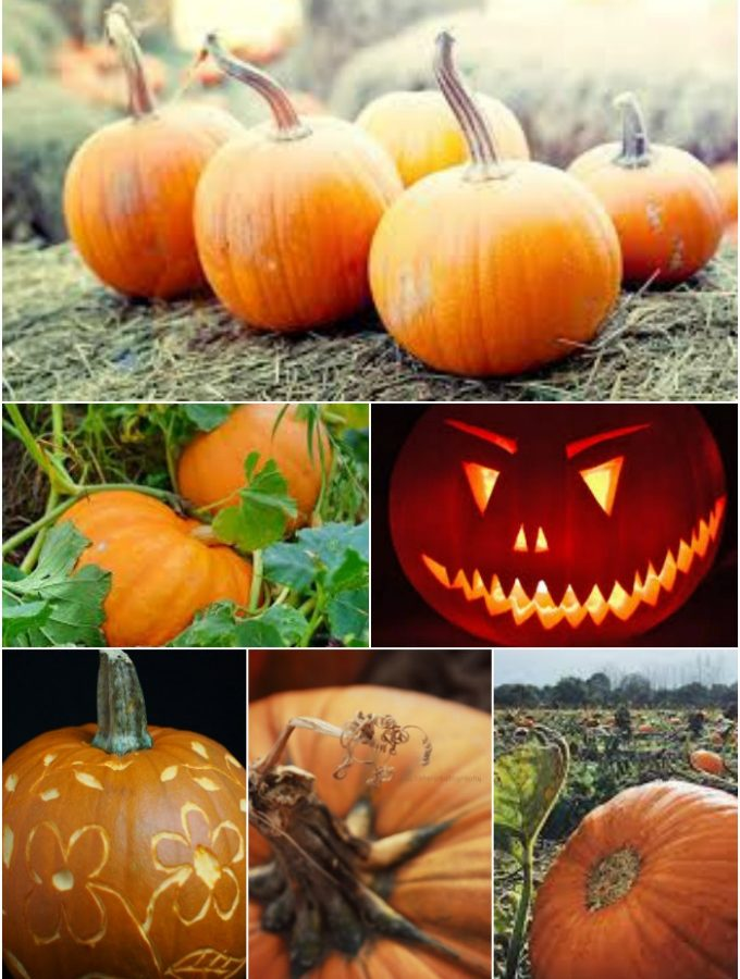 pumpkin urecipes by larder love