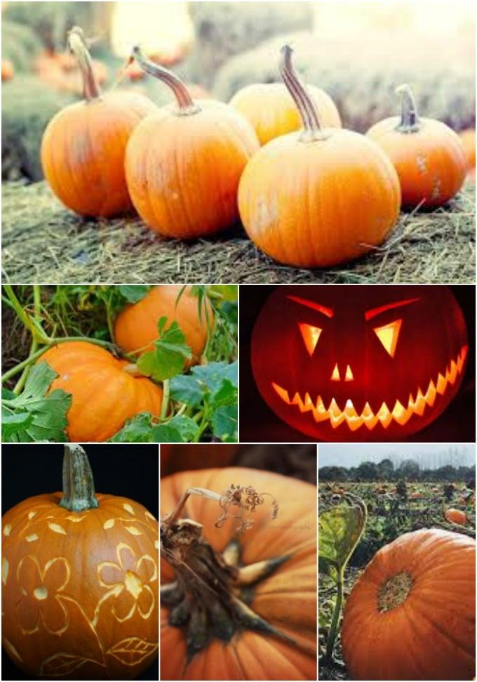 pumpkin urecipes by larder love