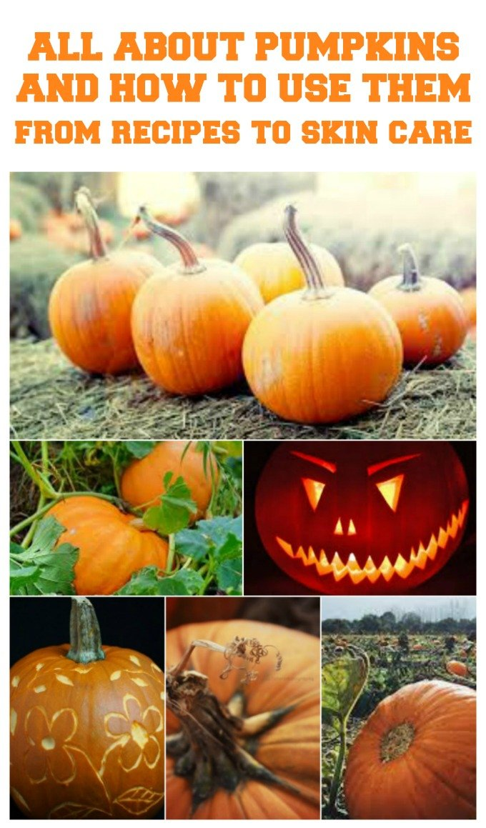 all about pumpkins round up