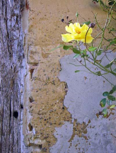 FlowersWall2