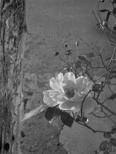 FlowersWall3