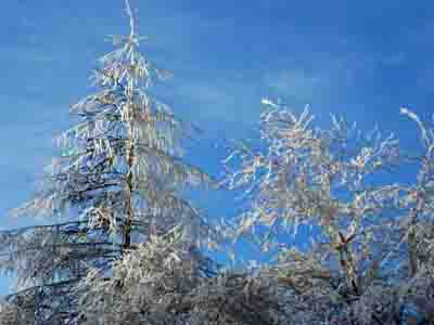 FrozenTrees_edited-1