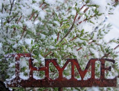 SnowThyme