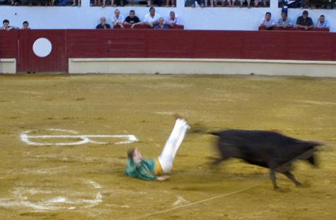 Bulls6